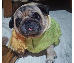 Dog Clothes: Dog Sherwani Wedding Outfit (Green)