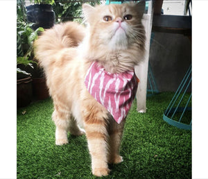 Dog and Cat Bandana: Traditional Pink Ikat Bandana for Pets