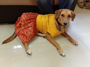 Dog Clothes: Indian Wear Anarkali Dress for Dogs (Yellow and Red)