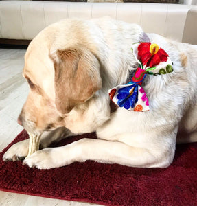 Bow Ties for Dogs: Gujarati Mirror Embroidery Bows