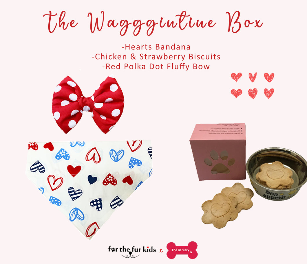 Valentine's Day Dog Box: Perfect Gift for Your Pet