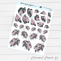 D142 - Pink Princess Philodendron