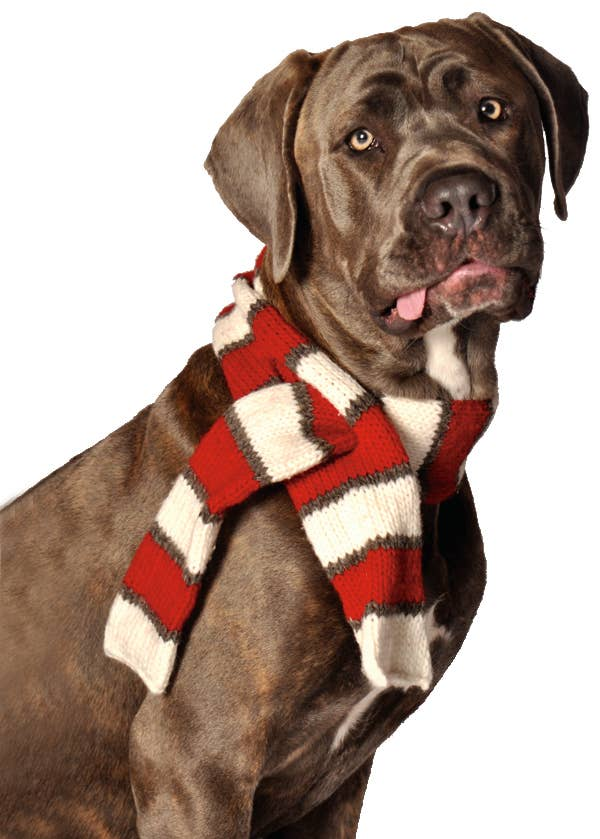 White and Red Dog Scarf