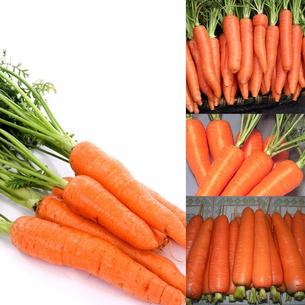 500Pcs Non-Gmo Carrot Seeds
