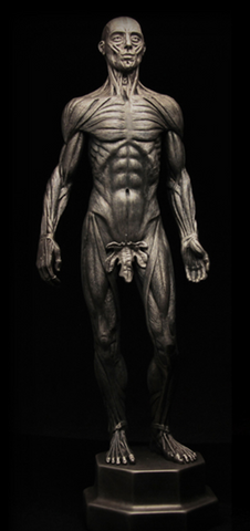 Galen (Vestiges Anatomical)