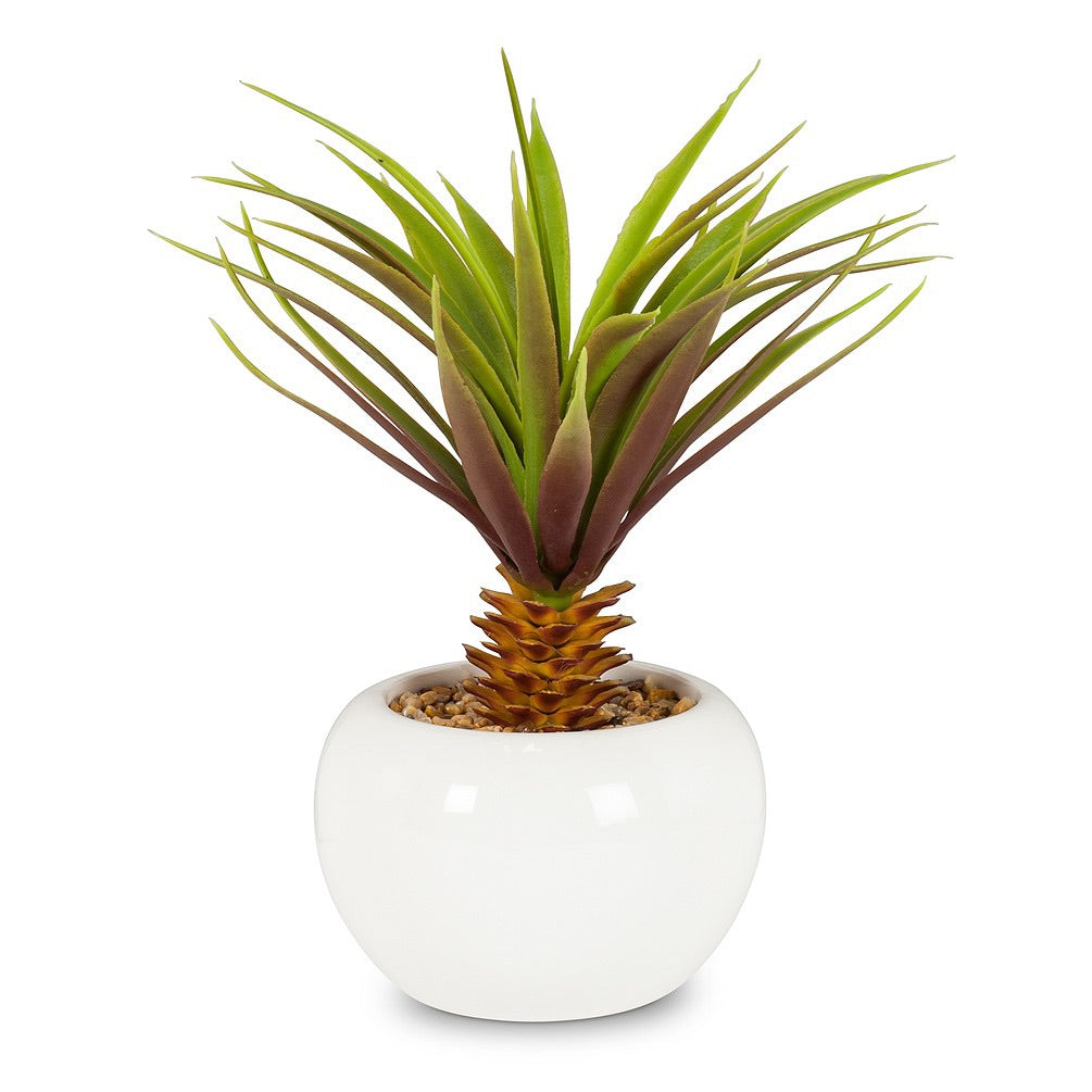 leafy palm in pot