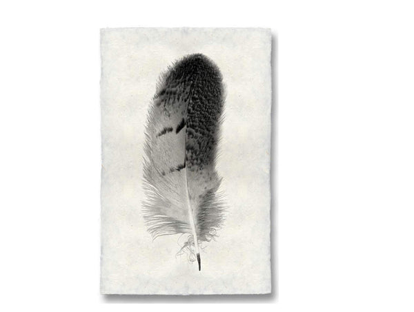 Large Feather Print #7