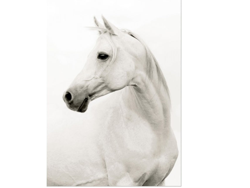 Portrait of a Stallion
