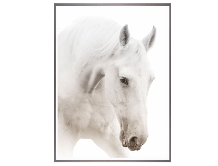 White Horse Black and White Photo Large