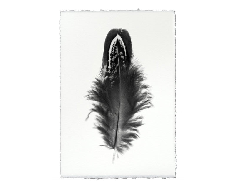 Large Feather Print #3
