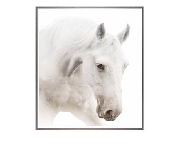 White Horse Black and White Photograph Small
