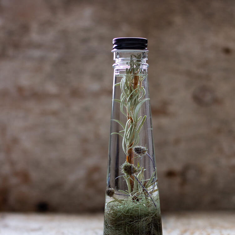 SANCTUARY - ROSEMARY DUO