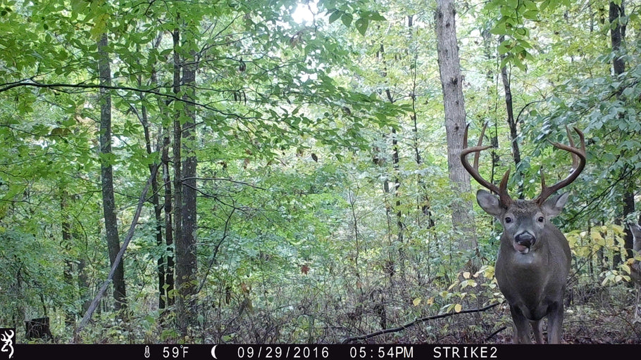 Best Trail Camera Accessories of 2020 | Best Gifts for Hunters