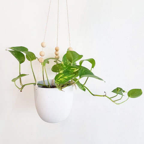 White Tin Hanging Planter
