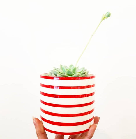 Red and White Stipe Pot