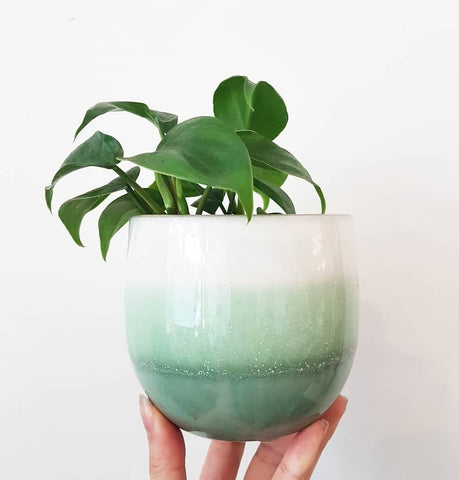 Ombre green pot. Gorgeous green base, pale green centre and white top. Indoor planter for indoor plants. Perfect pot for indoor plants. Ceramic with drainage hole.