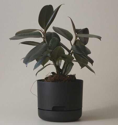 Mr Kitly Selfwatering Pot - 170mm Black