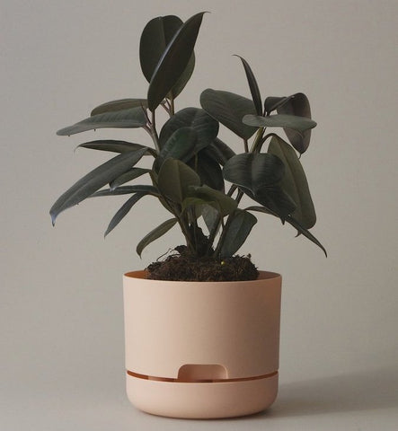 Mr Kitly Selfwatering Pot - 170mm Pale Apricot