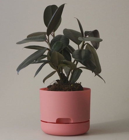 Mr Kitly Selfwatering Pot - 170mm Persimmon