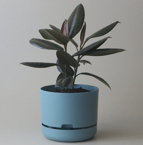 Mr Kitly Selfwatering Pot - 250mm Pond Blue