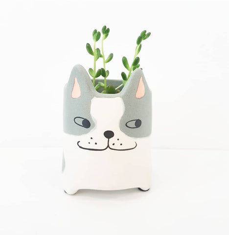Suspicious Kitty Planter