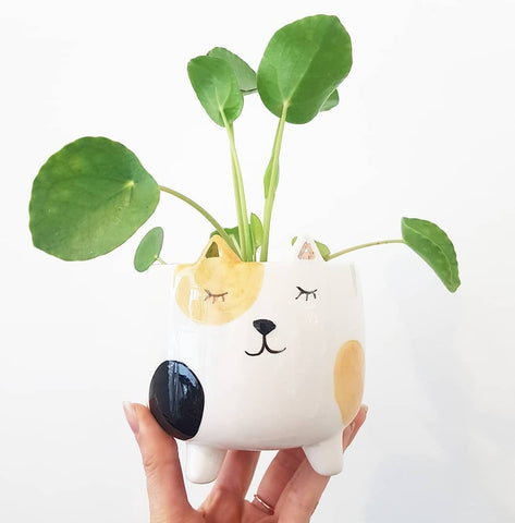 Kitty Planter - Small