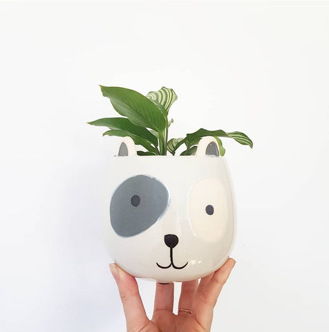 Spotty Dog Planter