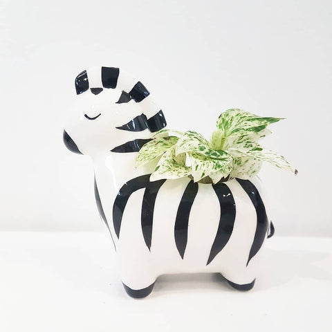 Ziggy Zebra Planter
