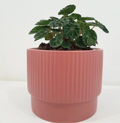 Dusty Pink Pot