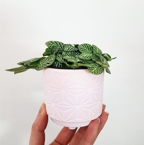 Pink Patterned Pot - Extra Little