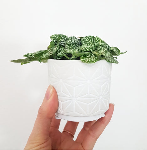 Grey Patterned Pot - Extra Little