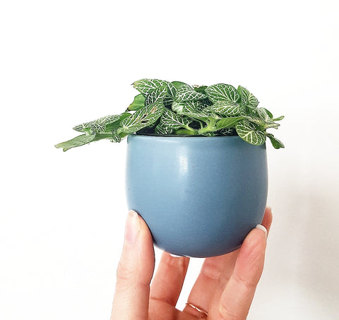 Classic Extra Little Pot - Moody Blue