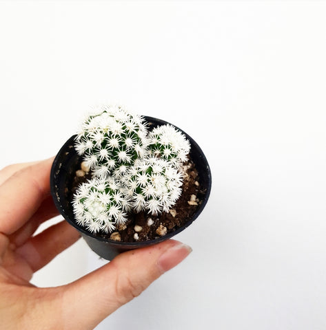 Cute Cactus - 60mm Pot #2