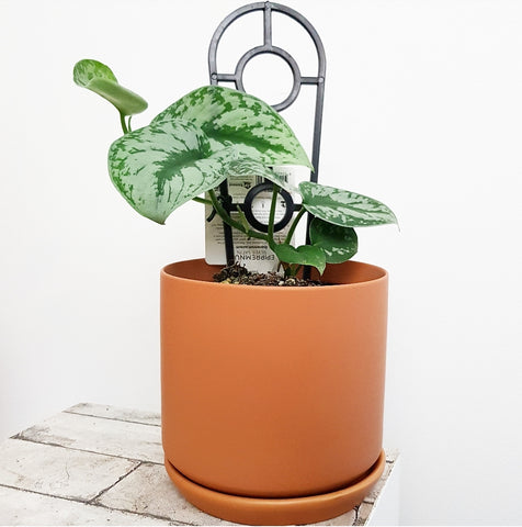 Lush Planter Terracotta - Medium