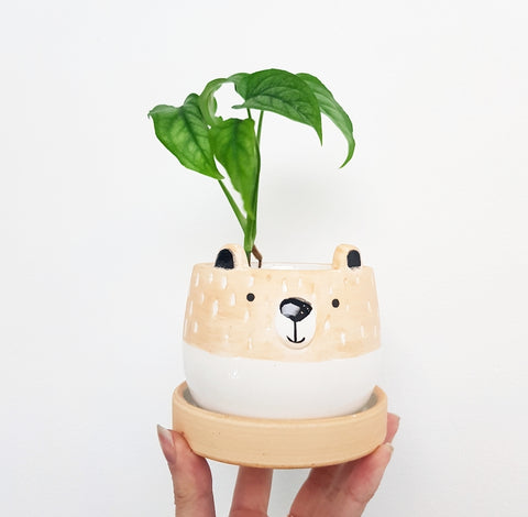 Little Bear Planter and Saucer