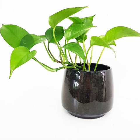Gianna Pot Black - Medium