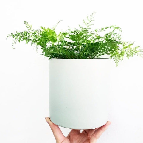 Classic Pot 120mm - Mint