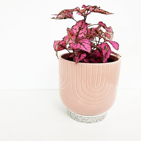Pink Pot with Terrazzo Base