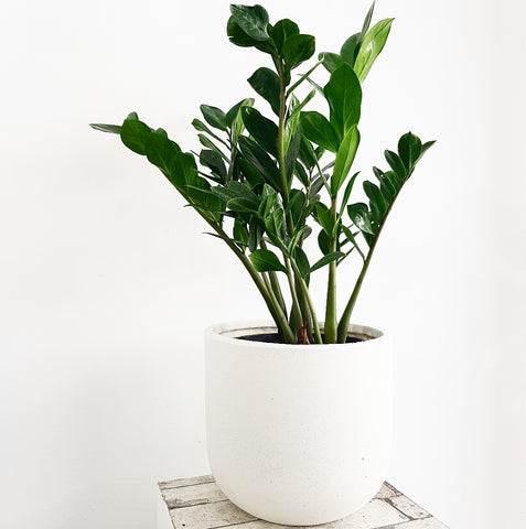 Atlas Egg Planter - Medium *Click & Collect Only*
