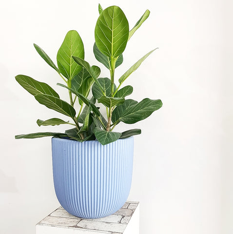 Blue Chalk Pot - Medium *Click & Collect Only*