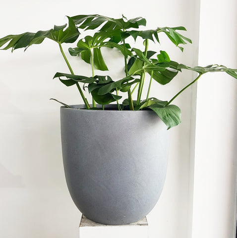 Asher Planter Grey - Extra Large *Click & Collect Only*