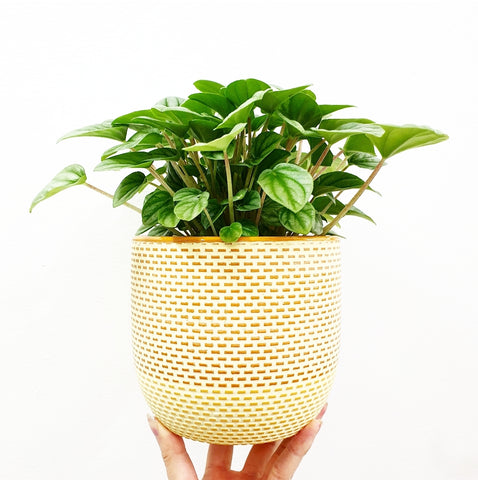 Holly Planter - Mustard