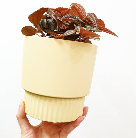 Veneto Ceramic Pot - Butter