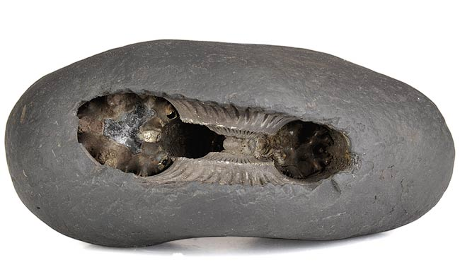 Sacred Shaligram Stone for Puja