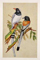 Miniature Painting 'Beautiful Birds'