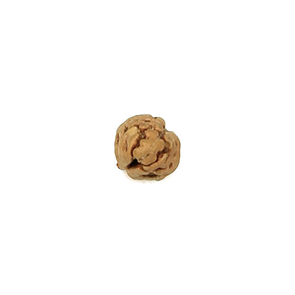 1 Mukhi Rudraksha Bead from Java