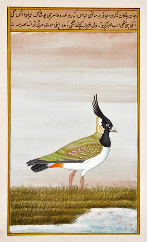 Exotic Bird Miniature Painting