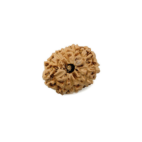 Eleven Faced Rudraksha Bead (code:4234)