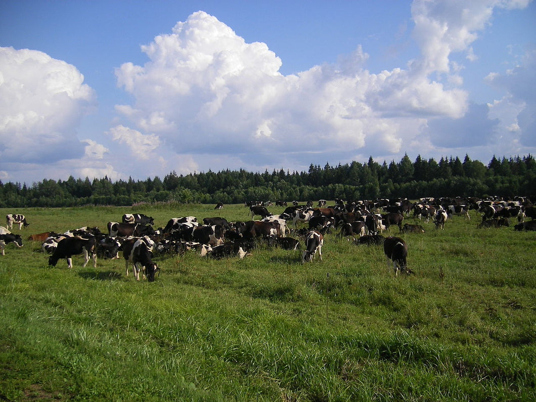 Belarus Beef & Cattle Analysis - October 2016