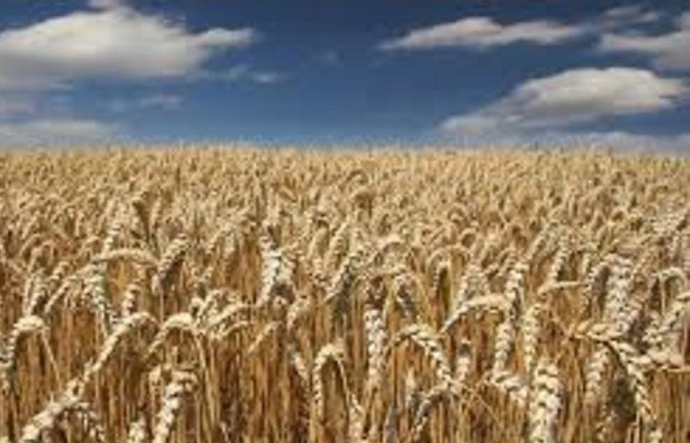 Wheat India Data & Analysis - May 2015